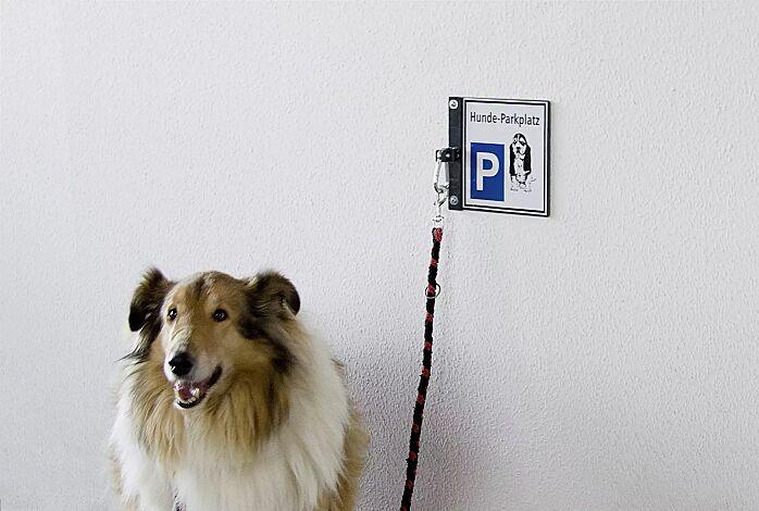 Hunde-Parkplatz BEAGLE zur Wandbefestigung, in RAL 7016 anthrazitgrau